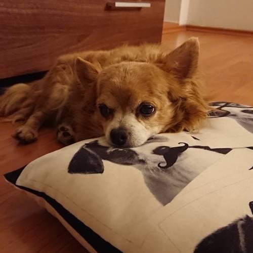 Roztok na cistenie usi pre psov