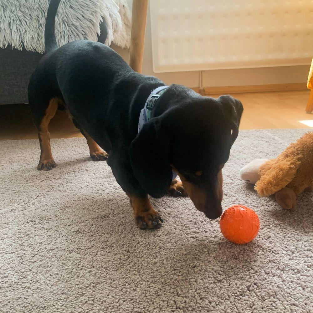 Hračka pes Lopta s otvorom na krmivo TR - test