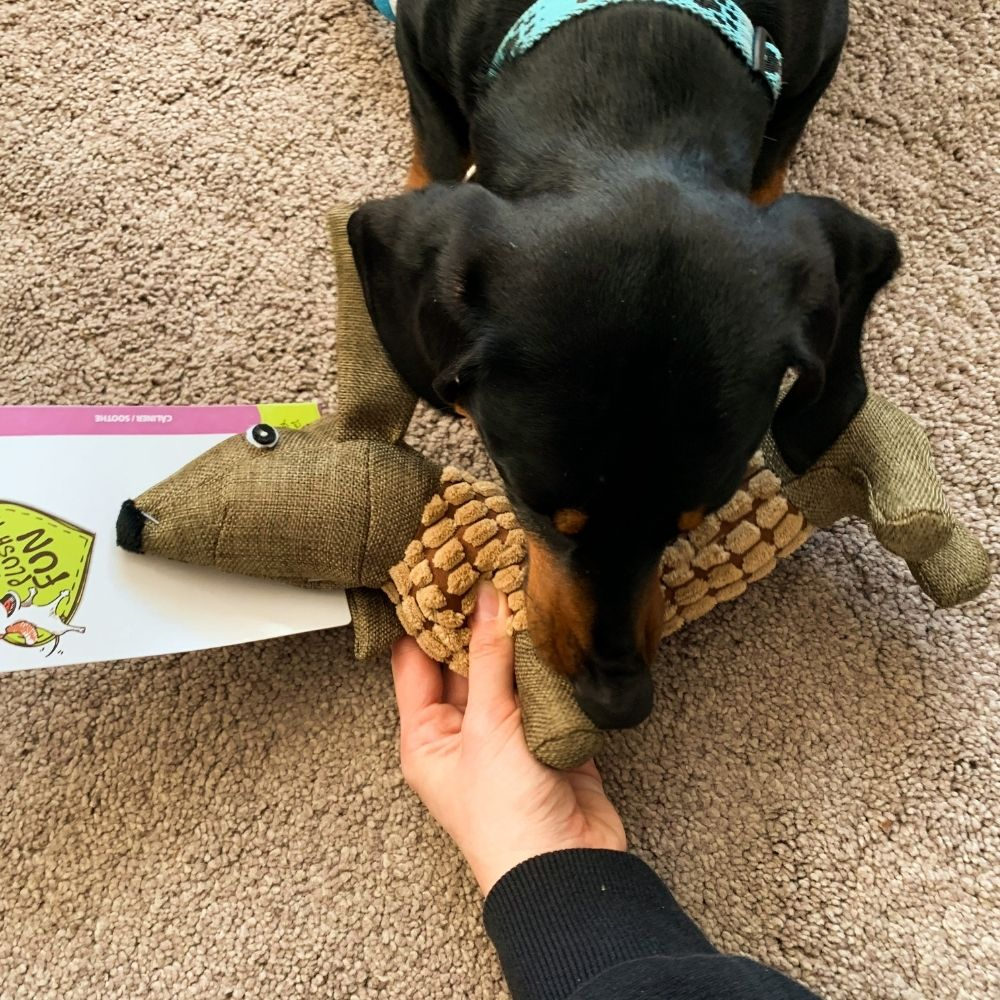 Hračka pes Jezevčík DOUGY pískajúci plyšový - test