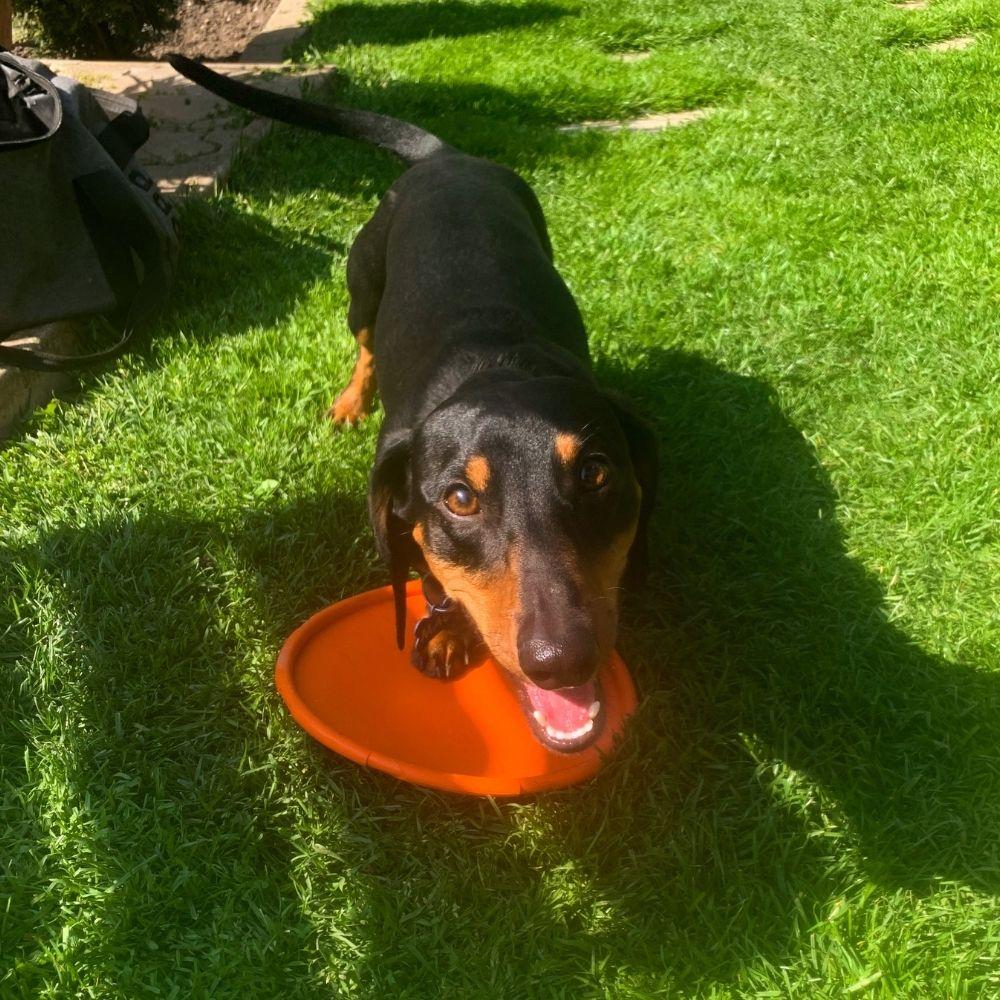 """Lietajúci tanier """"Doggy Disc"""" plávajúci - test"""
